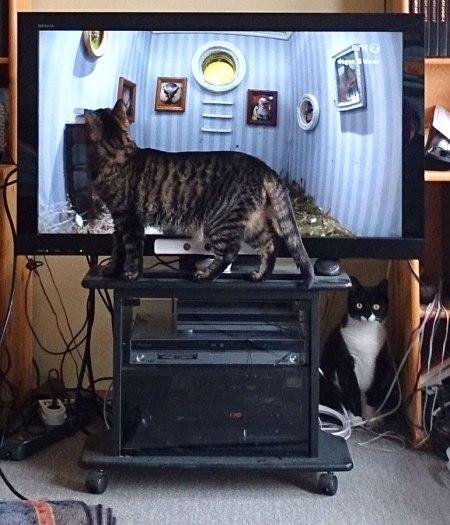 Nera og Tigris følger interessert med på #Piipshow #nrkpiip